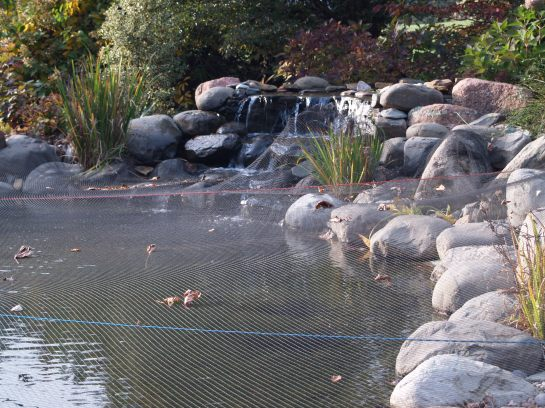 Pond with net covering