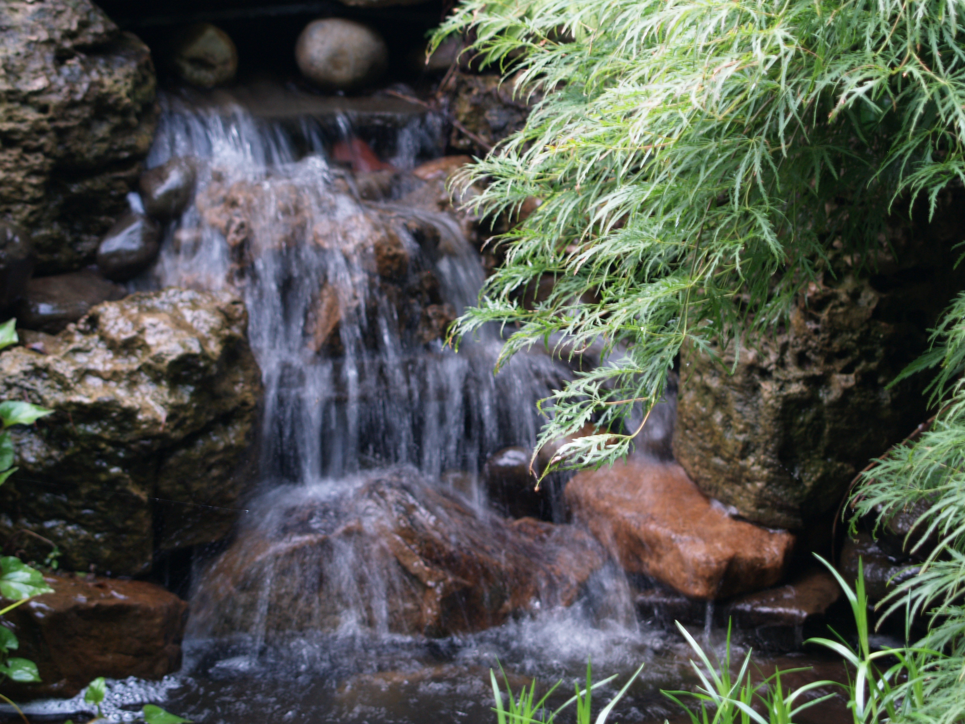 planning a garden pond ramblin u0027 through dave u0027s garden