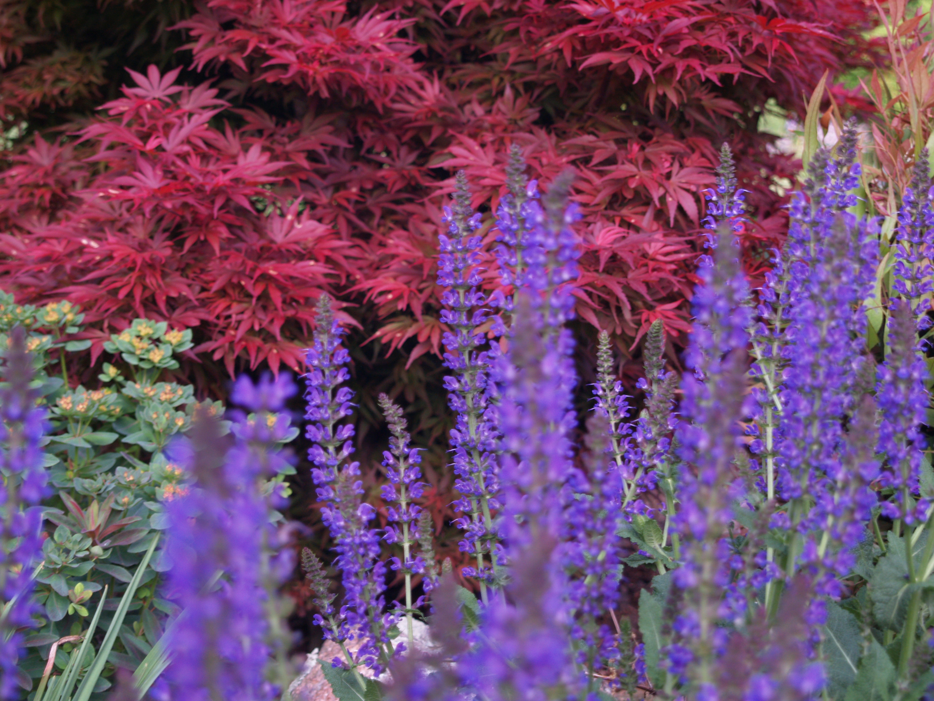 Forget The Flowers Shrubs And A Mention Of Perennials Ramblin