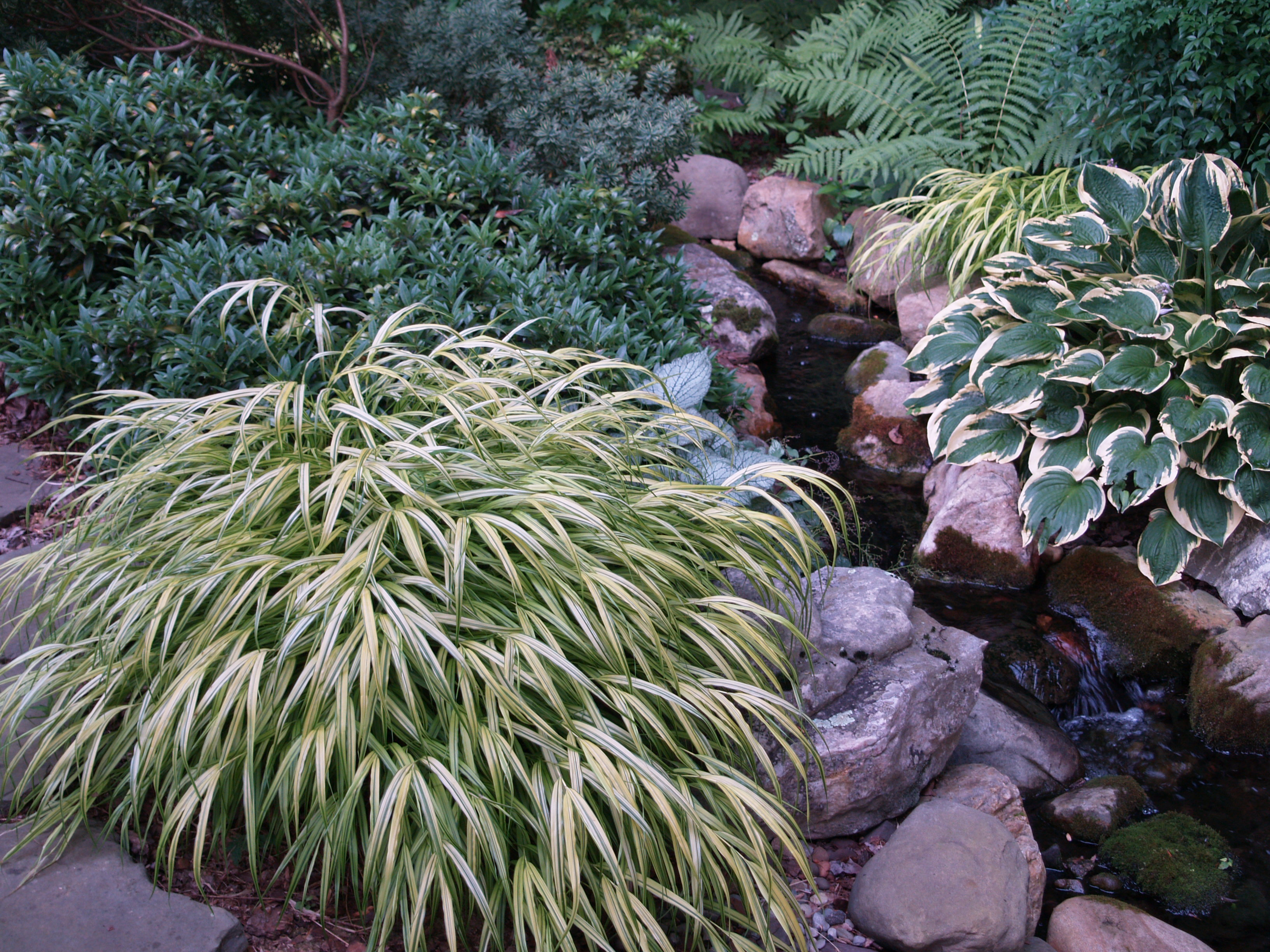 Japanese water garden plants - If