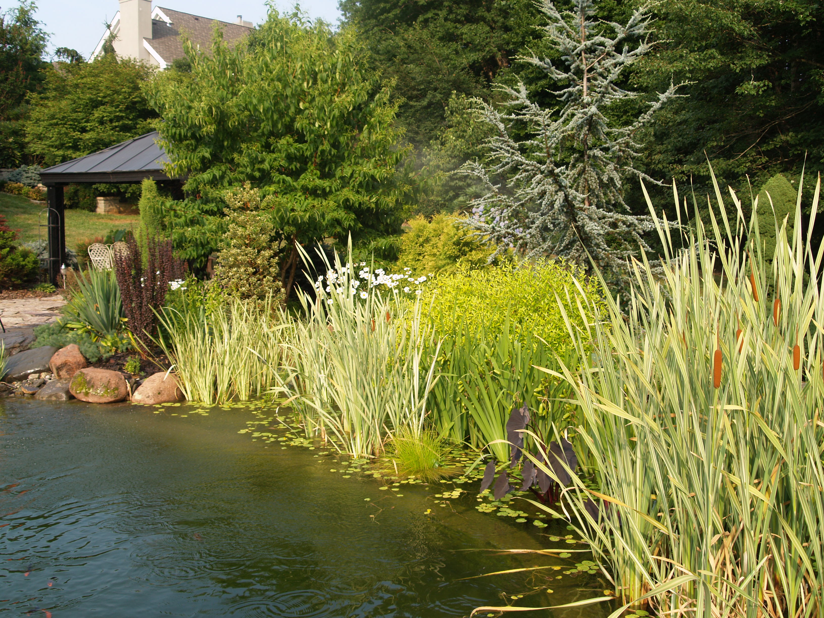 Water Gardens: The Swimming Pond -Summer 2010