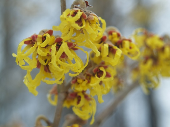 Arnold Promise witch hazel in better days.