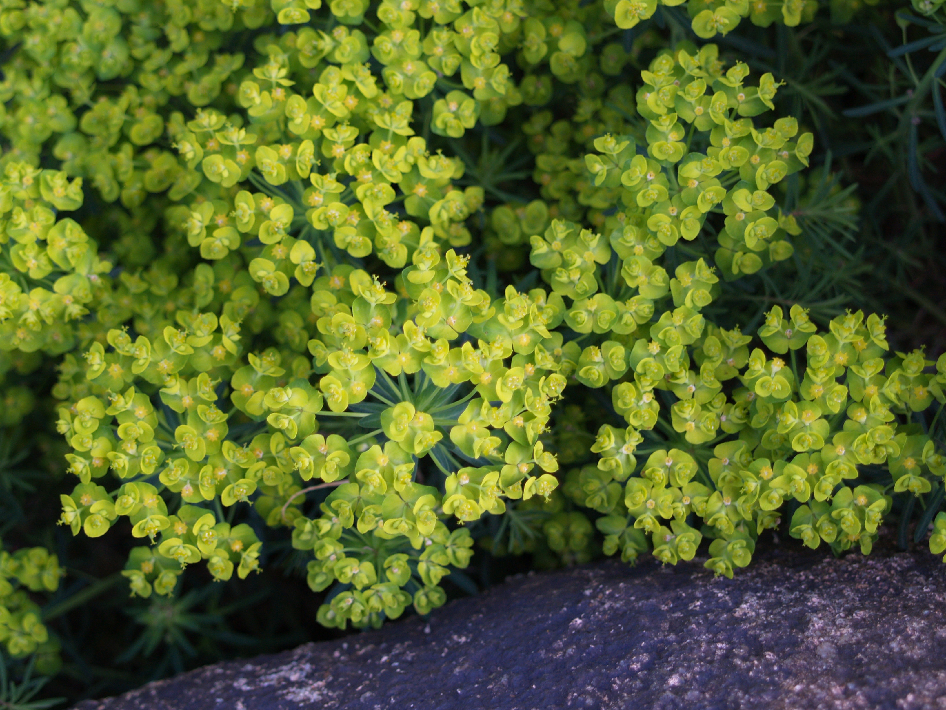 Shrubs For Shade | Casual Cottage