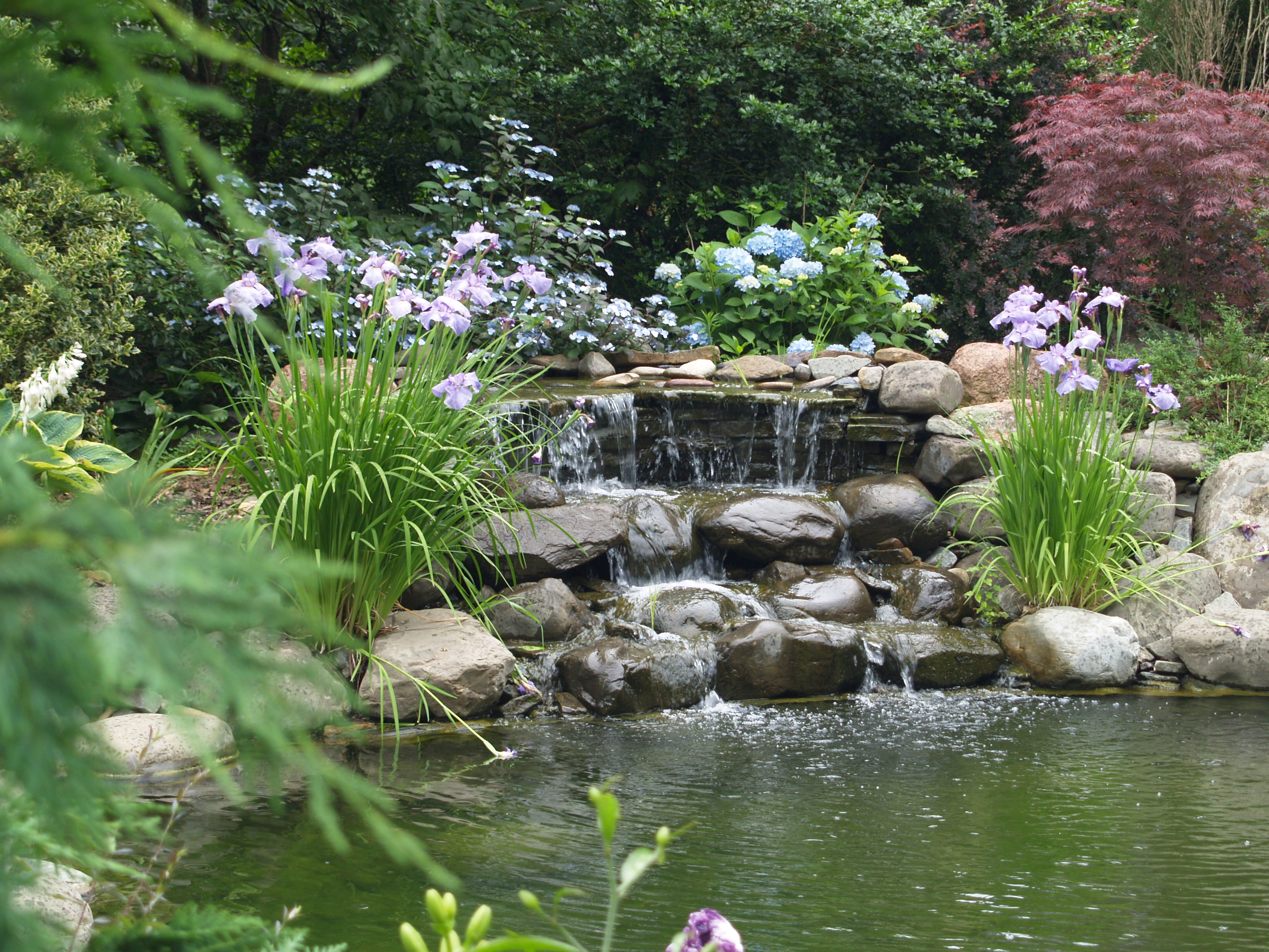 Garden ponds are a delight ramblin 39 through dave 39 s garden for Garden waterfall fountain