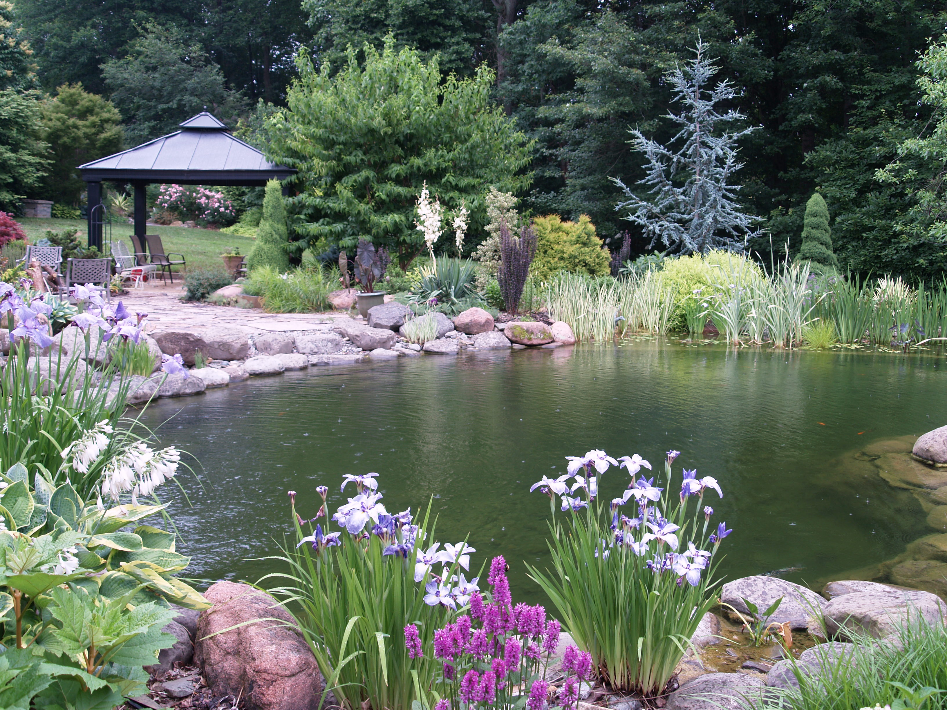 Garden ponds are a delight ramblin 39 through dave 39 s garden for Pond landscape