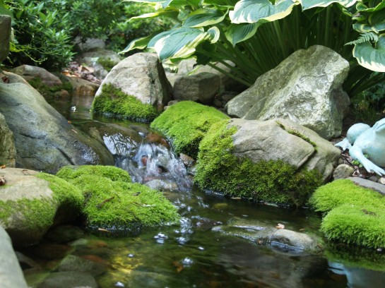 Mossy rocks in the shady stream