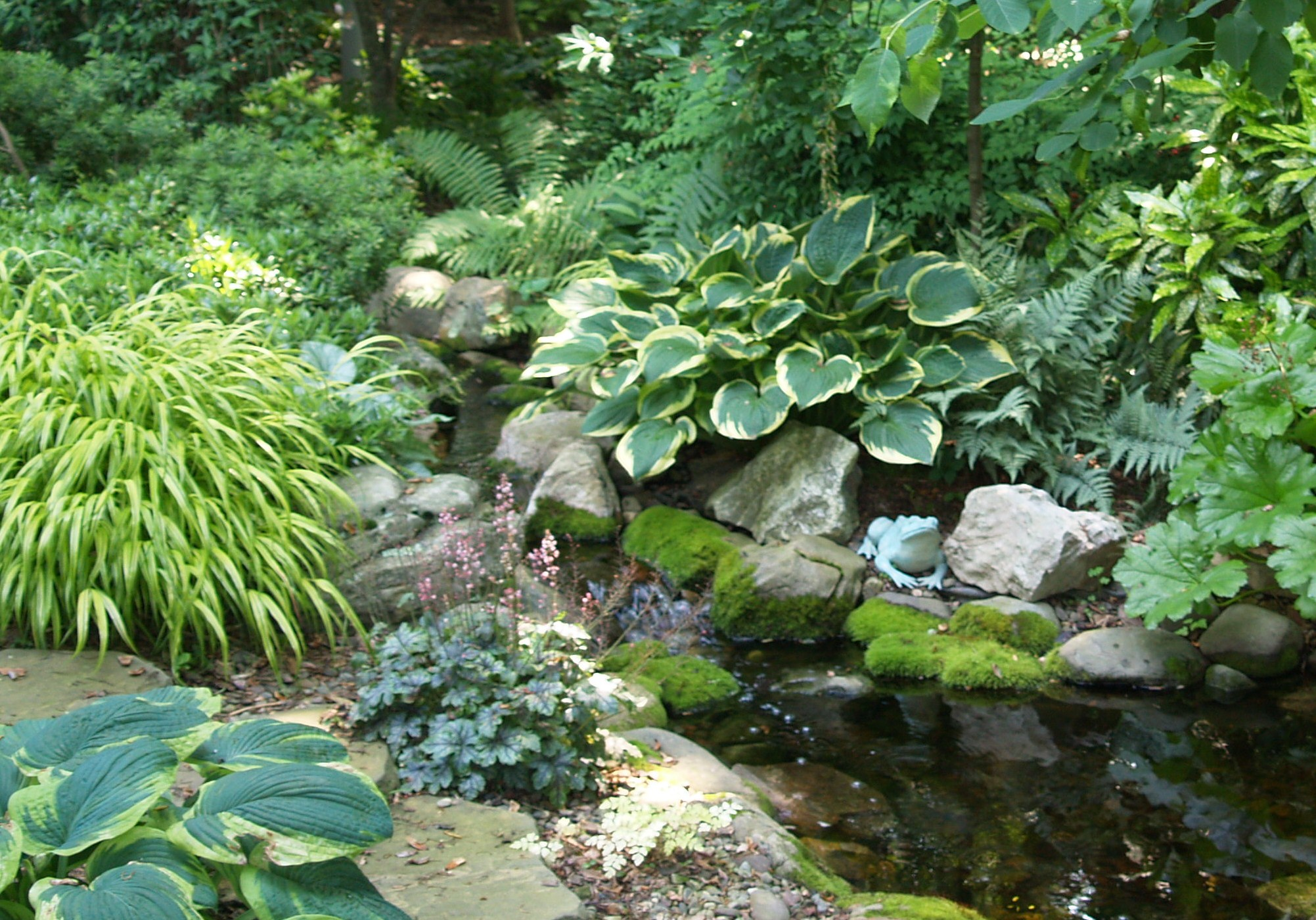 Hostas and forest grass border this shady stream for Plants to put in pond