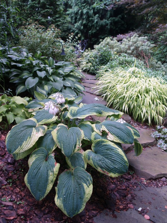 Hostas and Japanese Forest grass arch over a stone path