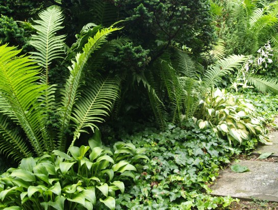 Dwarf hemlock, hosta, ferns, and ivy