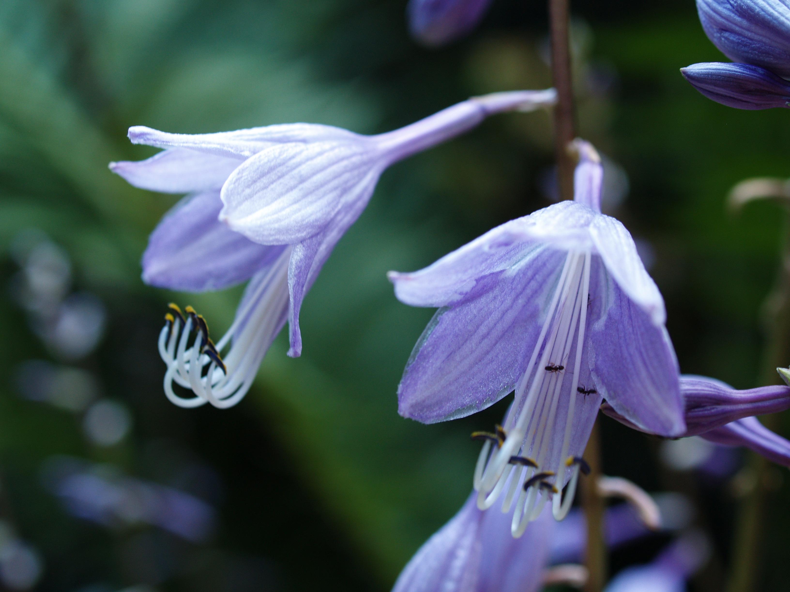 Blooming In Mid September Ramblin 39 Through Dave 39 S Garden