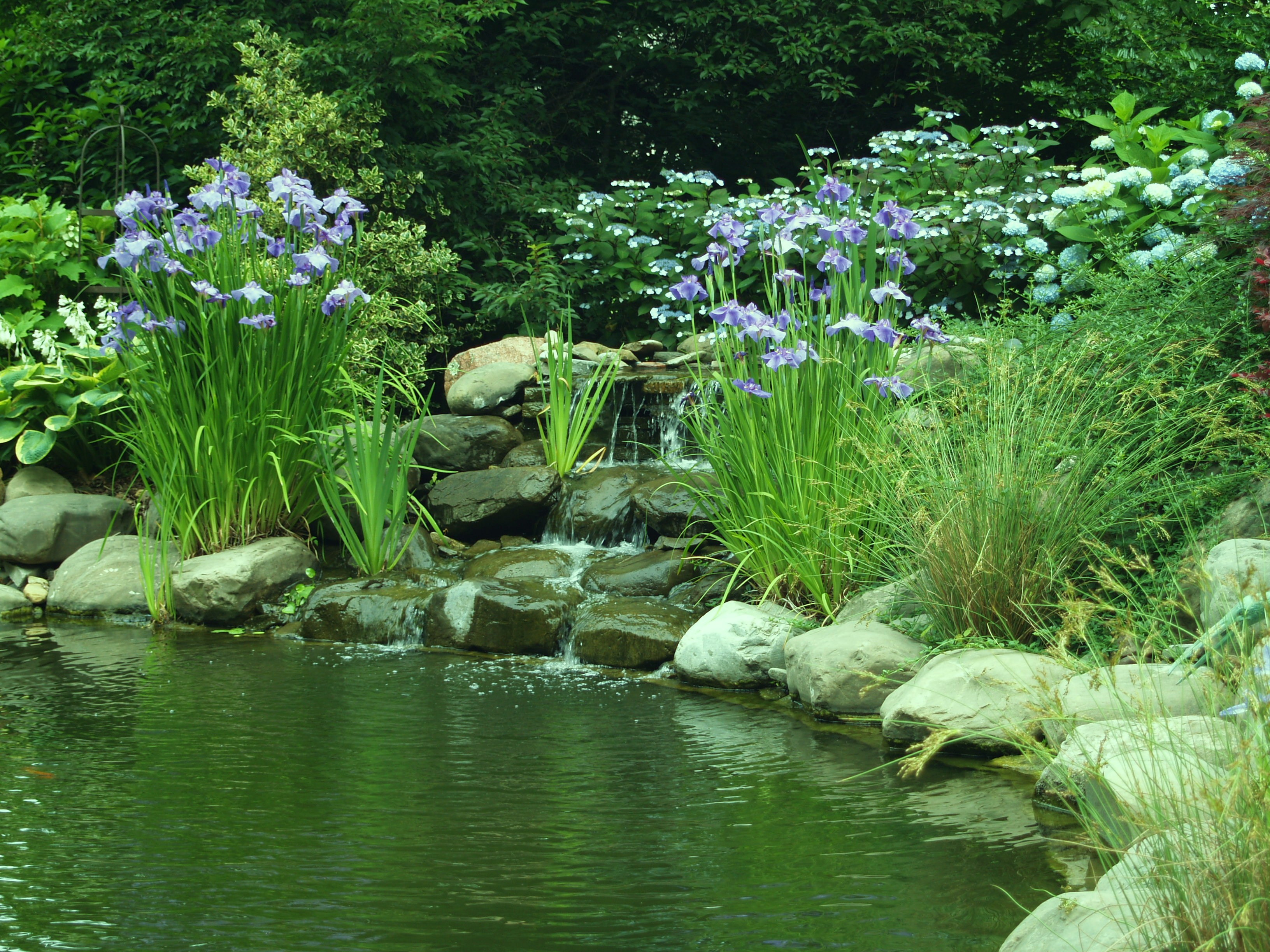 Are five ponds too many ramblin 39 through dave 39 s garden for Plants to put in pond