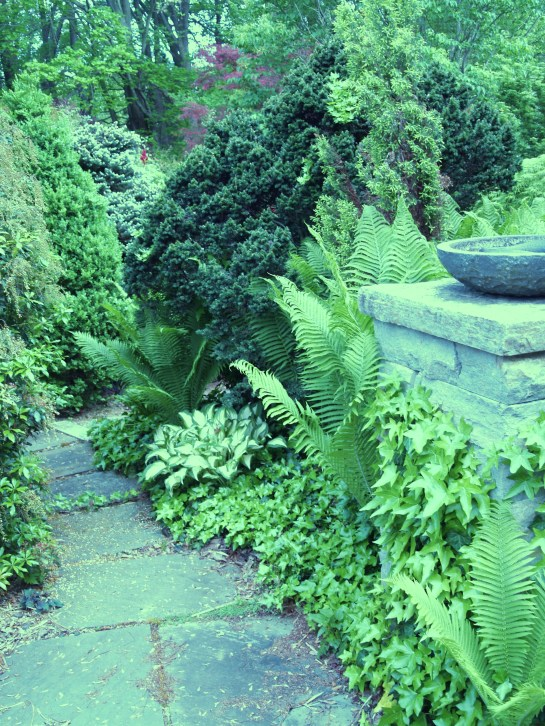 Ferns, dwarf hemlock, and hosta