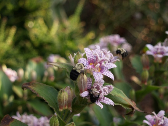 Miyazaki toad lily and bumblebees