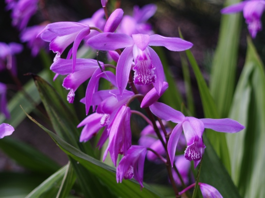 Ground orchids spread dependably if give a bit of sunlight and well drained soil