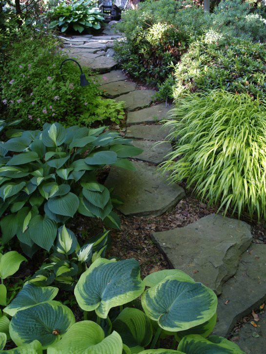 Hostas and Forest grass