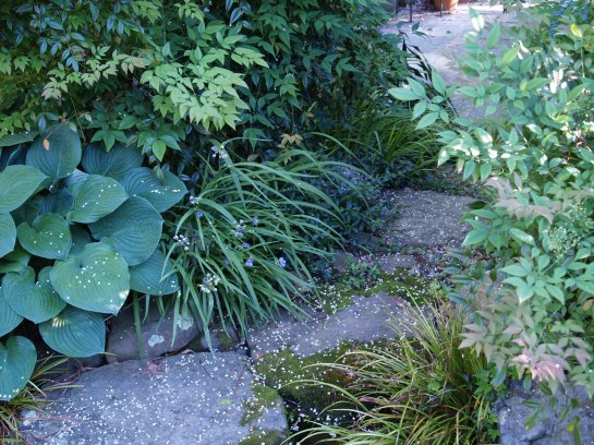 Hosta and nandina along a path