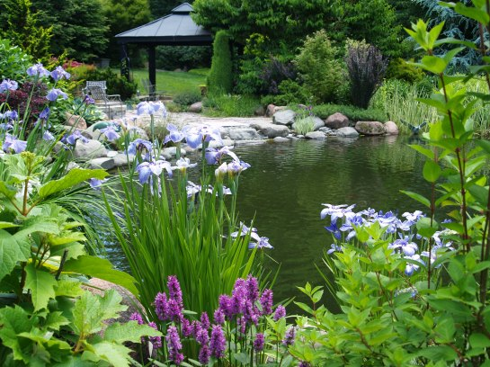After a few years irises and hydrangeas flowered at the pond's edge. In recent years the jungle has become more dense, though the pond is bordered by flowers through much of spring and summer.