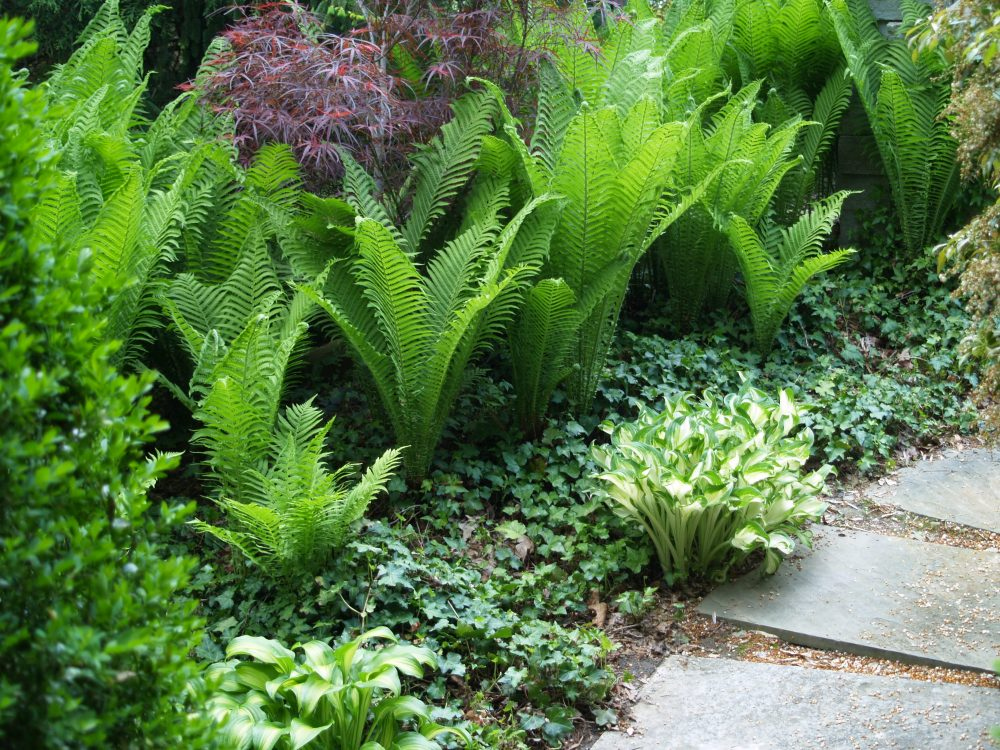 The Ostrich ferns were borrowed from damp shade