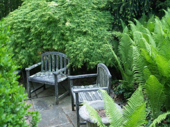 Viridis covers much of one of the garden's ponds and a portion of this patio.
