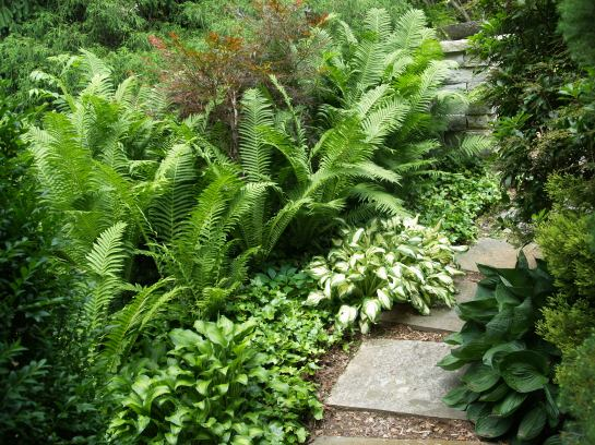 Ferns and hostas flank this bluestone path