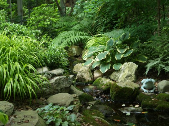My favorite spot in the garden. A stone path follows a stream with lined with moss covered stones, flanked by hostas, ferns, and Japanese Forest grass