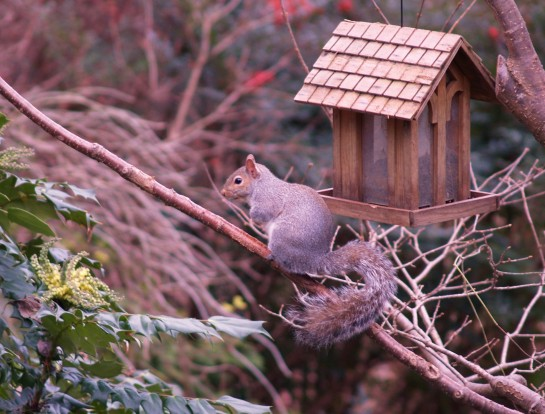 The birdfeeder is perhaps the most accessible feeder made, so I can hardly complain that squirrels visit frequently.