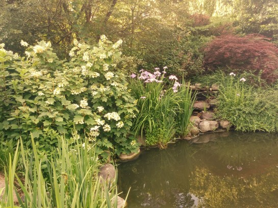 Oakleaf hydrangeas and Japanese irises border the koi pond.