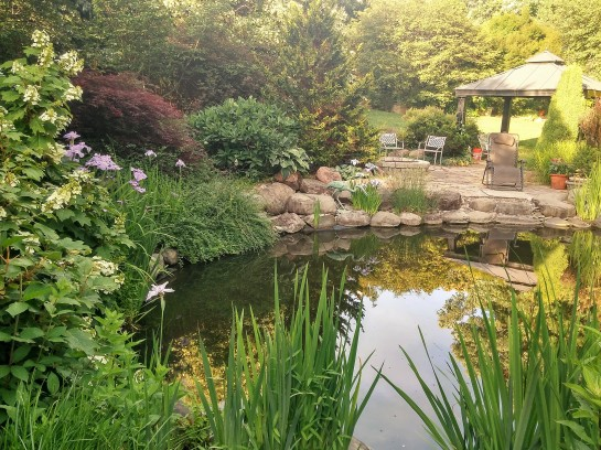 Today, hydrangeas, irises, and rushes fill voids between boulders that line the koi pond. Until a few years ago I could walk the entire edge of the pond, but now this is impossible.