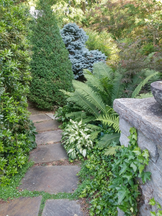 The bluestone path is flanked by hostas and ferns that must occasionally be pruned so the path does not disappear.