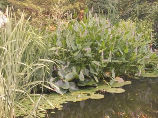 Water gardens ramblin 39 through dave 39 s garden for Koi pond bog filter
