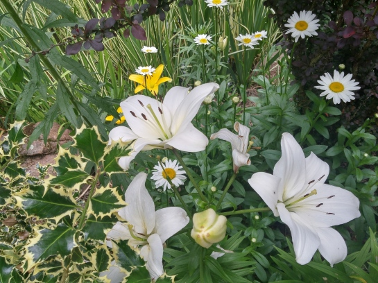 This jumble of lilies and daisies inhabits a hidden corner beside the koi pond that can only be seen by pushing through Japanese maples and holly.