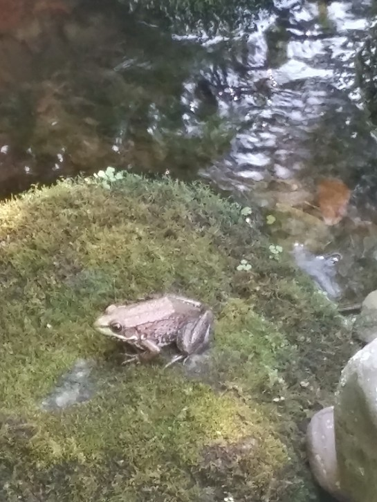 Frog on a mossy rock